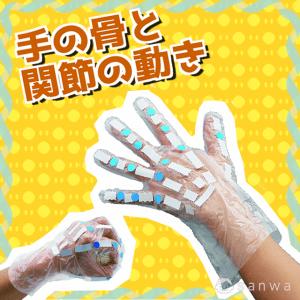 手の骨と関節の動き|タイトル画像